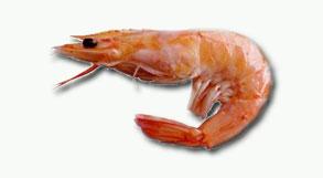 schrimp2